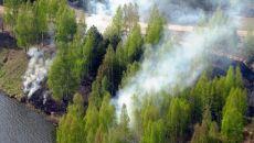 Причины экологических проблем лесных зон
