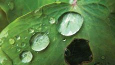 Кислотные дожди – отрицательные последствия выпадения вредных осадков