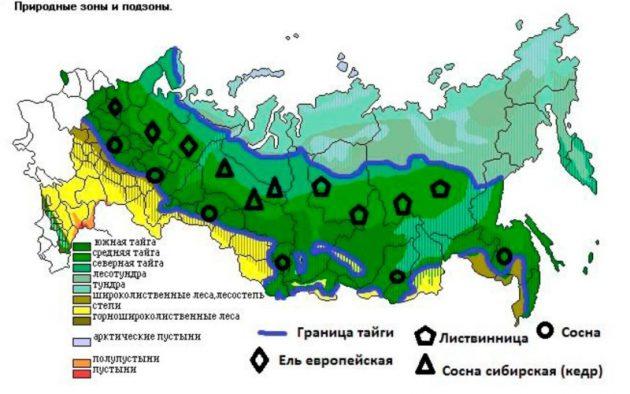 Зона тайги России