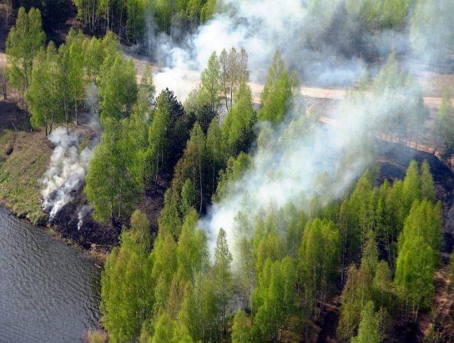 Экологические проблемы лесных зон
