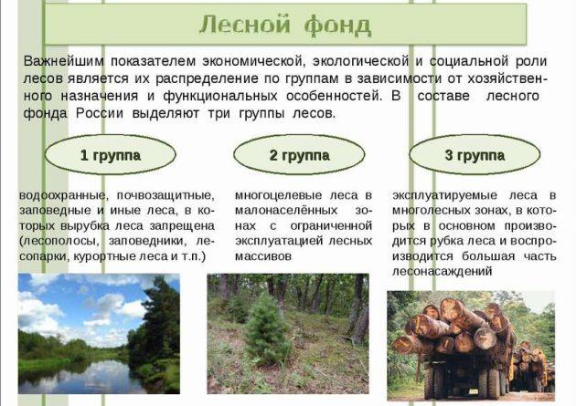 Экономическая роль леса