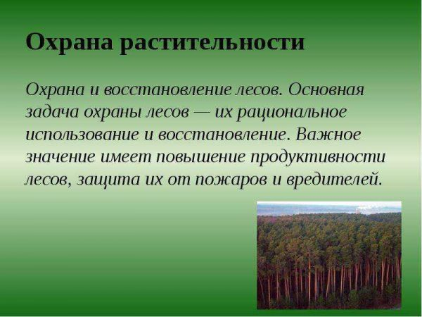 Охрана растительности