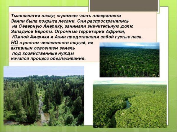 Уменьшение площади леса с ростом чисельности человечества
