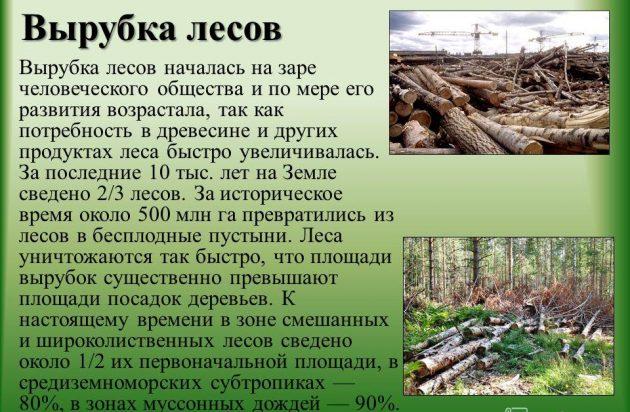 Ущерб от вырубки лесов