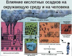 Влияние кислотных осадков на окружающую среду