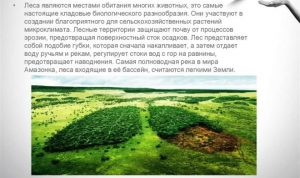 Важность лесов