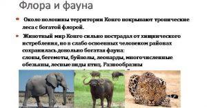Флора и фауна Конго