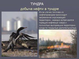Одна из причин загрязнения тундры - добыча нефти