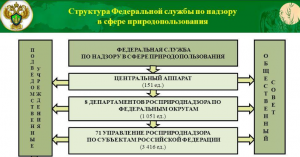 Структура Федеральной службы по надзору в сфере природопользования