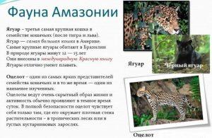 Фауна Амазонки
