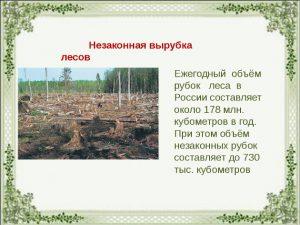 Вырубка леса в России